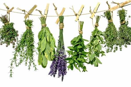 erbe aromatiche: Hanging upside-down da una linea di erbe Archivio Fotografico