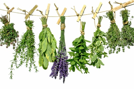 thyme: Herbs hanging upside-down from a line Stock Photo