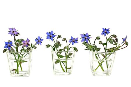 Borage flowers in water