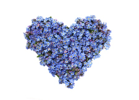 Heart shaped from forget-me-not flowers