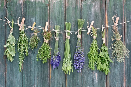 various herbs haging upside-down on line  photo