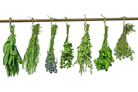 herbs hanging upside-down  Stock Photo
