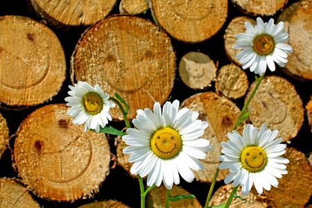 woodpile: daisies and firewood with a smiling face Stock Photo