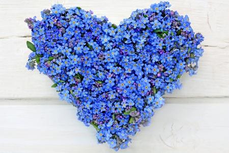 hart bloem: hart gemaakt van vergeet-mij-nietje bloemen op witte houten achtergrond Stockfoto