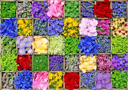 collage with colorful summer flowers photo