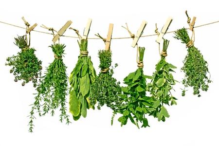 különböző friss zöldfűszerek lóg a vonalon Stock fotó