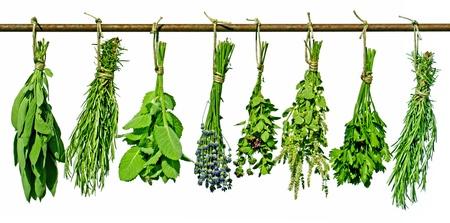 tomillo: varias hierbas que cuelgan de una varilla, aislados