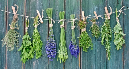 rosemary: variety of fresh green herbs hanging on a line