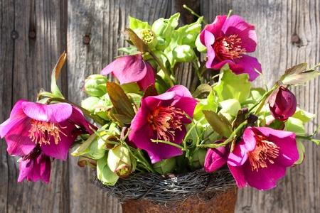 helleborus bouquet in an old vase Stock fotó