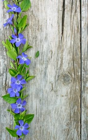木の板に常緑の花の boorder