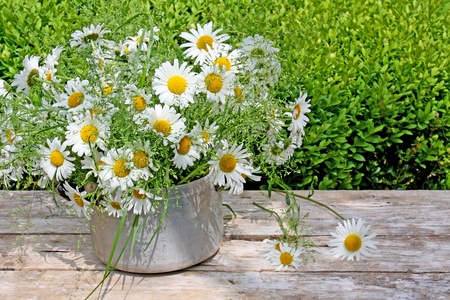 bouquet of marguerites in an old pot photo