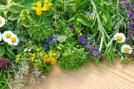 combination of different herbs photo