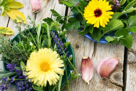 ehető virágok, fűszernövények és fokhagymával Stock fotó