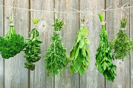 variété de herbes aromatiques fraîches pendaison en grappes en face de un mur en bois
