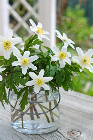 wood anemones in vase Stock fotó