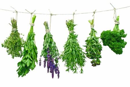 Különböző friss fűszernövények lógott a szárítási pórázon Stock fotó