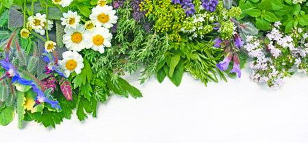 különböző friss gyógynövények a deszkán