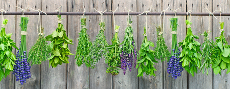 different fresh herbs hanging in bundle on a wooden wall photo