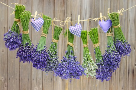 different varieties of lavender hanging in bundle on a leash Stock Photo