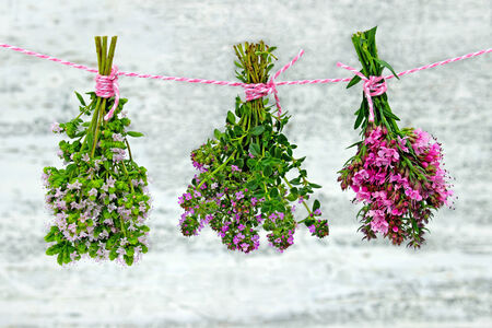 different fresh herbs hanging in bunches on a leash