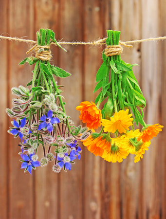 a posy marigold and borage hanging on a leash to dry Stock Photo