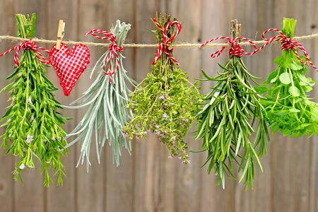 albahaca: sabroso, planta de curry, el tomillo, el romero y la albahaca colgando de una correa Foto de archivo