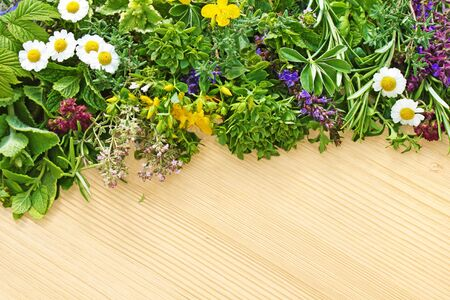 different fresh herbs and medicinal plants are located on a wooden board