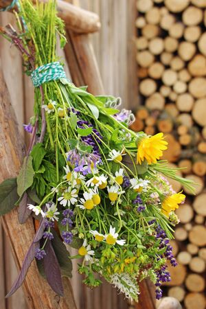 A bouquet of many different medicinal plants and herbs hangs on a wooden ladder