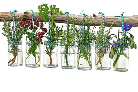 various fresh herbs from the garden hanging in glasses on a white background
