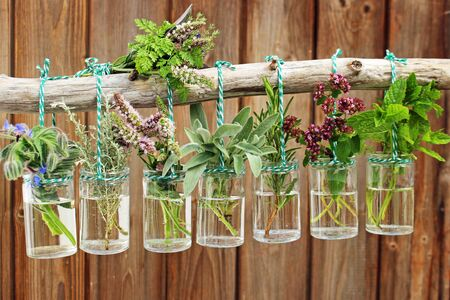 various fresh herbs from the garden hanging in glasses in front of wooden wall Stock Photo