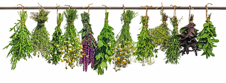 Various fresh herbs hang on a perch