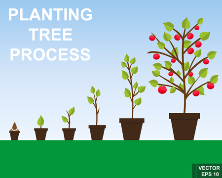 The process of growing trees. Steps. Garden. For your design. Illustration