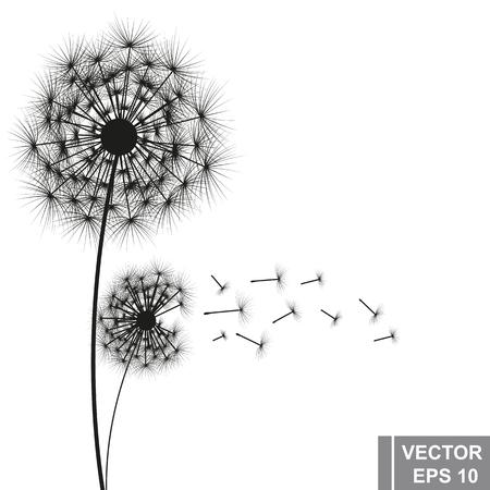 Paardebloem vector Vector Illustratie