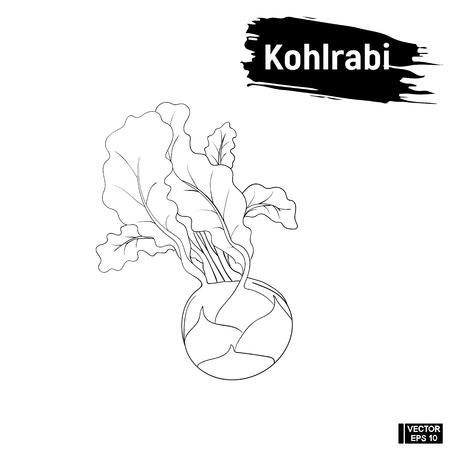 Vector image. Vegetarian cuisine. Black and white sketch of kohlrabi outline. Useful vegetables, imitation of ink Illustration