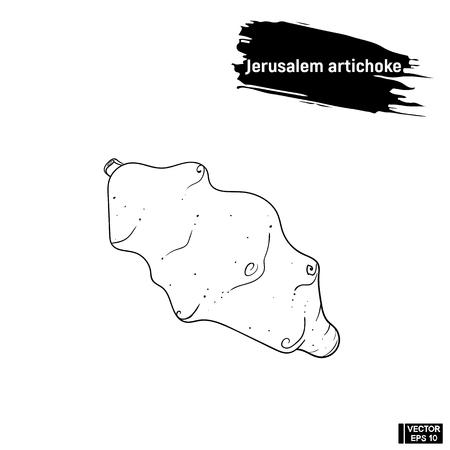herbaceous: Vector image. Black and white outline of a vegetable, sketch Jerusalem artichoke. Illustration