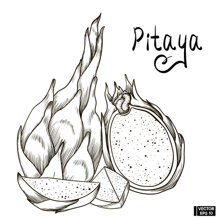 Vector image. A fruit sketch of pitaya. A set of hand drawing with a picture of dragon fruit and its slice