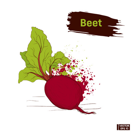 Vector image. Sketch of vegetable, imitation of colors ink. Splashes and blots, drawing of a beet.
