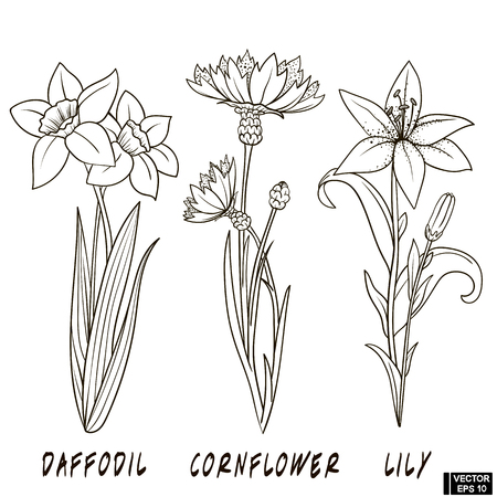 Vector image. A set of flowers hand drawn ink. Sketch of daffodil, cornflower and lily