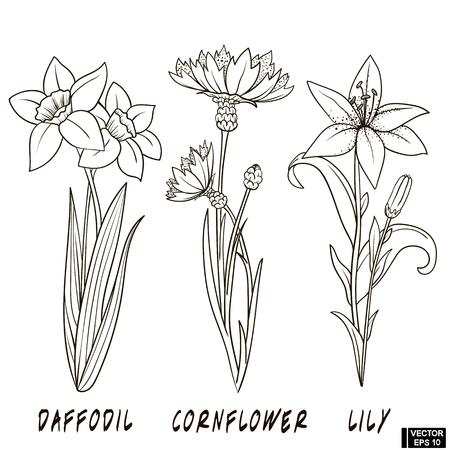 Vektorbild. Ein Satz Blumenhand gezeichnete Tinte. Skizze von Narzisse, Kornblume und Lilie