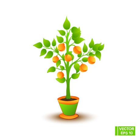 Mooie Citrusboom In Een Bloempot. Zelfgemaakte boom met mandarijnen, geïsoleerd object