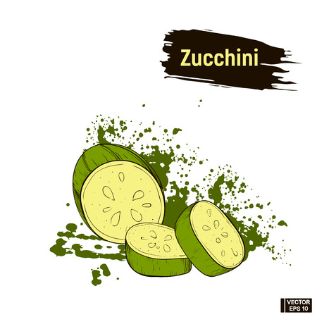 Vector image. Colored sketch of green Zucchini sliced. Useful ripe vegetables. Vegetarian cuisine.