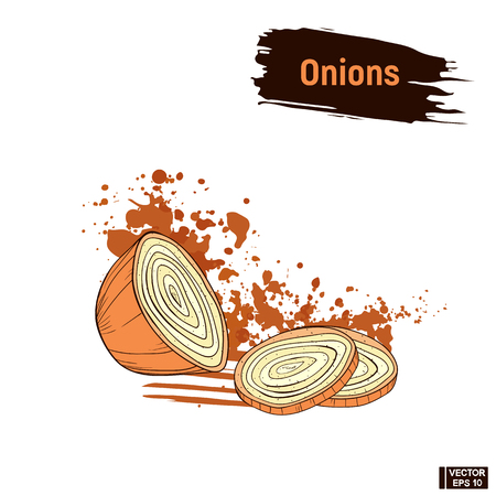 Vector image. Onions colored sketch in hand drawing style. Picture sliced of a onions in sepia