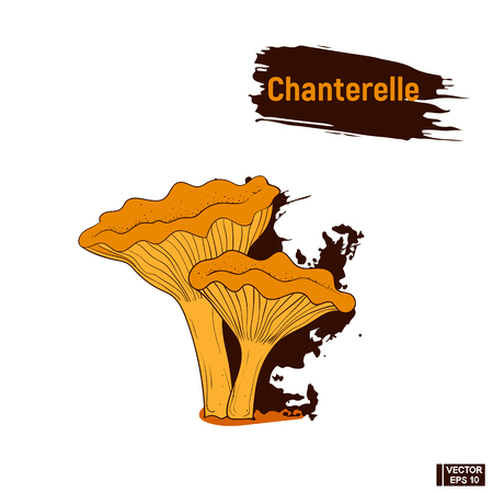 Vector image. Colored image of edible mushrooms. Sketch of brown mushrooms chanterelles, imitation of ink splashes and blots
