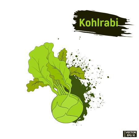 Vector image. Vegetarian cuisine. Colored sketch of green kohlrabi. Useful vegetables, imitation of ink splashes and blots Illustration