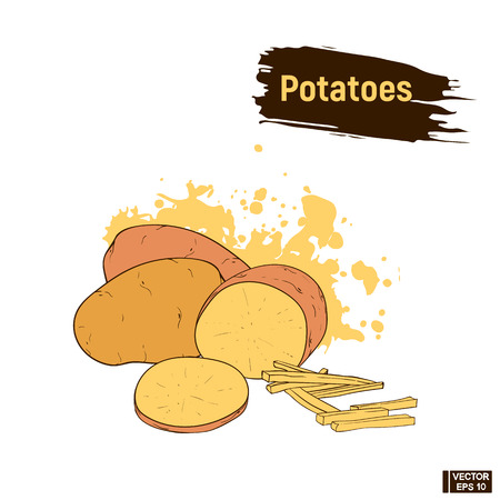 Vector image. Potato colored sketch hand drawing style. Sketch of a ripe vegetable, sliced potato, imitation of ink. Sepia, brown color