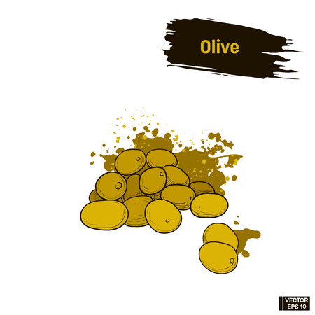oliva: Vector image. Colored sketch of green olives. A bunch of ripe olives, an imitation of ink.