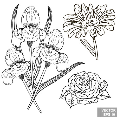 rose tattoo: Flower. rose, iris, chamomile. manual drawing. Circuit. Plant. For your design.