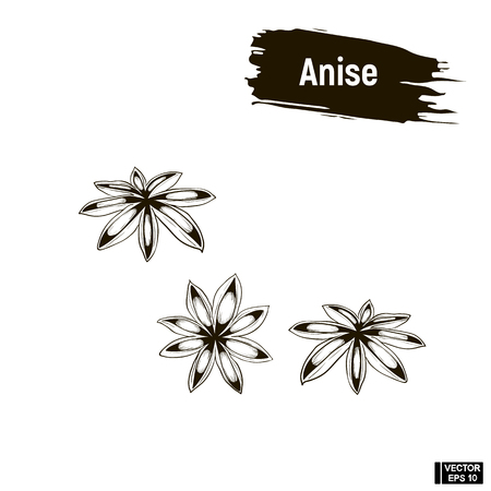 Vector outline image, anise. Spice, iImitation of ink. Illustration