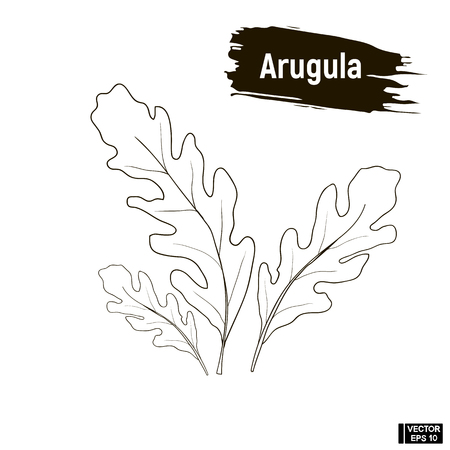 Vector image. Outline drawing of the arugula. Sketch of greenery, seasoning, imitation of ink. Ilustrace