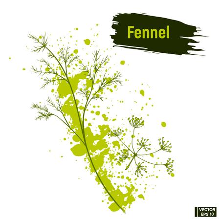 Vektorbild. Farbige Zeichnung von Fenchel. Skizzengrün, Dill-Imitation von Tintenspritzern und Klecksen.